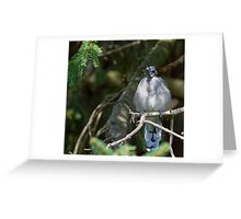 Shedding light and some Feathers Greeting Card