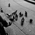 "City Life - ""Feeding Doves II"" by Denis Molodkin"