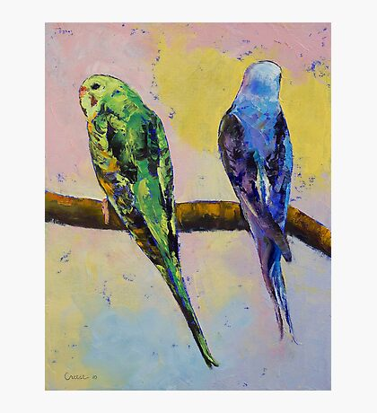 Green and Violet Budgies Photographic Print