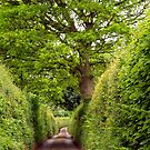 Down the Lane and Through the Trees by saxonfenken