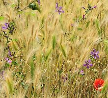 at the edge of the field the flowers mix in.. by David Tovey