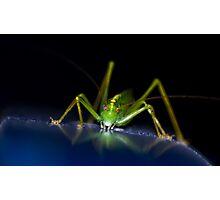 Grasshopper or Cricket? Photographic Print