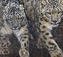 A pair of Snow Leopards by buttonpresser