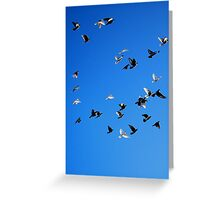 Racing Pigeons 2 Greeting Card