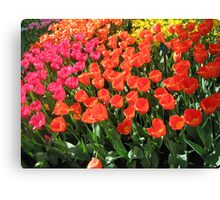 tulips of amsterdam Canvas Print