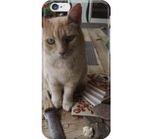 Tiger Poses for His Portrait, Santa Fe, New Mexico iPhone Case/Skin
