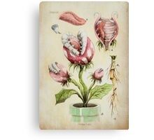 Piranha Plant Botanical Illustration Canvas Print