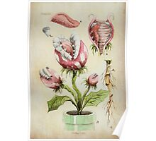 Piranha Plant Botanical Illustration Poster