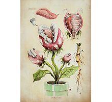 Piranha Plant Botanical Illustration Photographic Print
