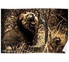 Moremi Mating Lion Poster