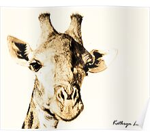 Kruger National Park Giraffe Poster