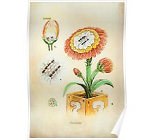 Fire Flower Botanical Illustration Poster