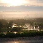 Morning Mist by Steve Hildebrandt