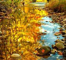 Autumn Gold by Claudia Kuhn