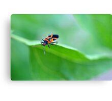 Assassin Beetle Canvas Print