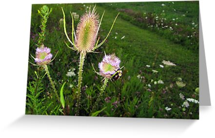 thistle bee by Leeanne Middleton