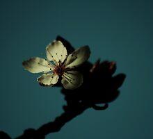 Elegance in a single bloom by Joshua Greiner
