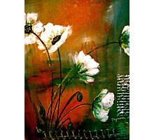 The Poppy Journals...Gold Dust Photographic Print