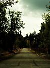 The darkest country road and the strong scent of evergreen by Joshua Greiner