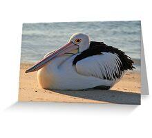 Pelican Resting Greeting Card