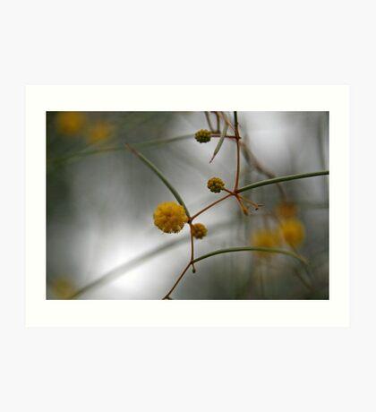 Yellow Wattle Art Print
