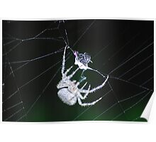 Working up the food chain...  a spider and his prey Poster