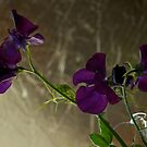 Sweet Pea Floral by Roxane Bay