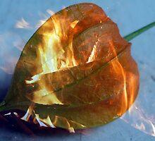 Flaming Lantern by PPPhotoArt