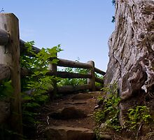 Forest Path - Ketchikan, Alaska by Lindsey Butler