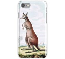 Kangaroos Vintage Drawing iPhone Case/Skin