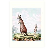 Kangaroos Vintage Drawing Art Print