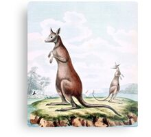 Kangaroos Vintage Drawing Metal Print