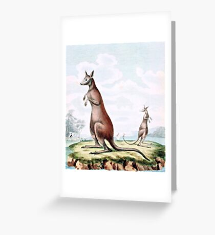 Kangaroos Vintage Drawing Greeting Card