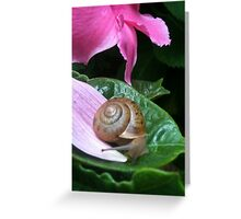 Tranquil Moment Greeting Card
