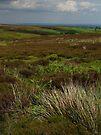 Dallow Gill Moor by WatscapePhoto