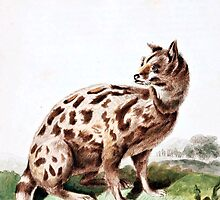 Leverian Possane Cat Art by goldenmenagerie