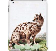Leverian Possane Cat Art iPad Case/Skin