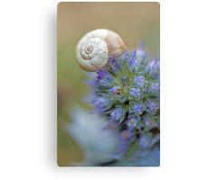 Snail on Sea Holly Flower Canvas Print
