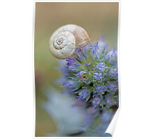 Snail on Sea Holly Flower Poster