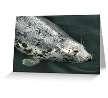The Grey Seal  Greeting Card