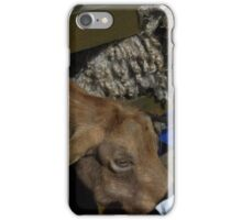 City Farm Goat iPhone Case/Skin