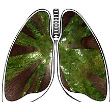 Lungs - Redwood Forest by riskeybr