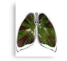 Lungs - Redwood Forest Canvas Print