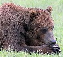 Ohmmmm... Meditating or Catching A Bear Nap? by A.M. Ruttle