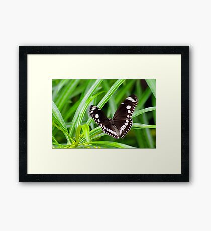 If a Butterfly Flaps it's Wings Framed Print