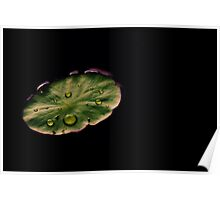 Lily pad Poster