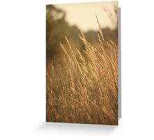 July Evening Breeze Greeting Card