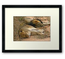 Sleeping big cats Framed Print
