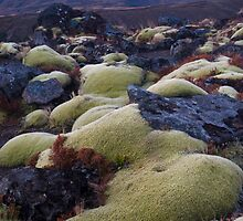 Mountain mosses by Paul Mercer