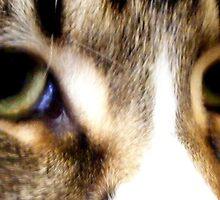 brand new eyes. by chaos josh.